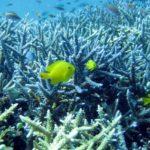 3月誕生石 さんご(珊瑚)の意味や「生前整理」の利口な仕方とは