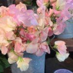 1月誕生花の花言葉や1月誕生石の宝石言葉や意味はご存知ですか
