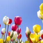2月誕生花の花言葉や2月誕生石の宝石言葉や意味はご存知ですか