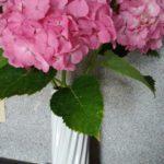 6月誕生花の花言葉や6月誕生石の宝石言葉や意味はご存知ですか
