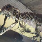 "<span class=""title"">ティラノサウルスの化石の値段や肉食恐竜の種類や琥珀との関係</span>"